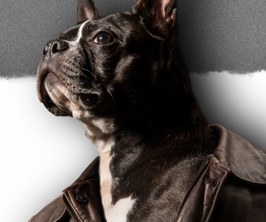 Photograph of dog wearing a leather jacket